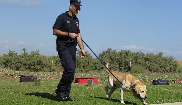 Los perros detectores están entrenados para detectar cualquier sustancia