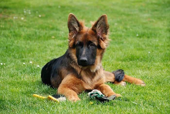 Adiestramiento del perro cuidando su bienestar y su salud