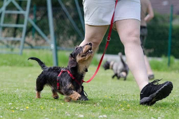 Educación sin estrés en el adiestramiento canino