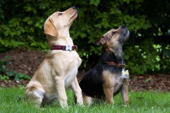 Perros aprendiendo las órdenes básicas de adiestramiento