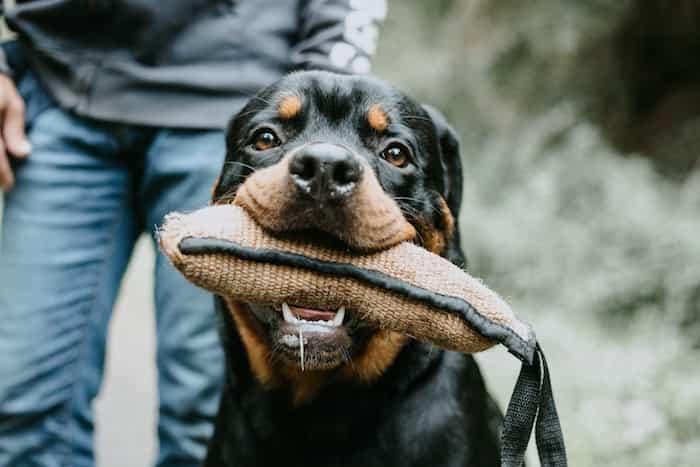 Material utilizado para el adiestramiento de perros detectores